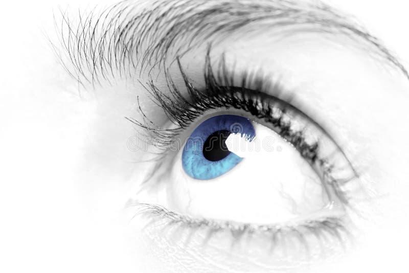 Fin de œil bleu de femelles vers le haut photographie stock libre de droits