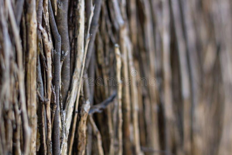 Fin de barrière de bâton vers le haut de pousse photographie stock libre de droits