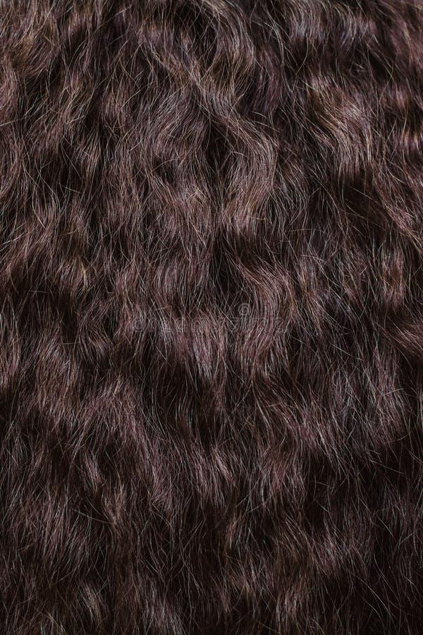 Fin de cheveu de Brown vers le haut textures et fond photo libre de droits