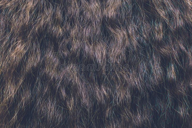 Fin de cheveu de Brown vers le haut textures et fond images stock