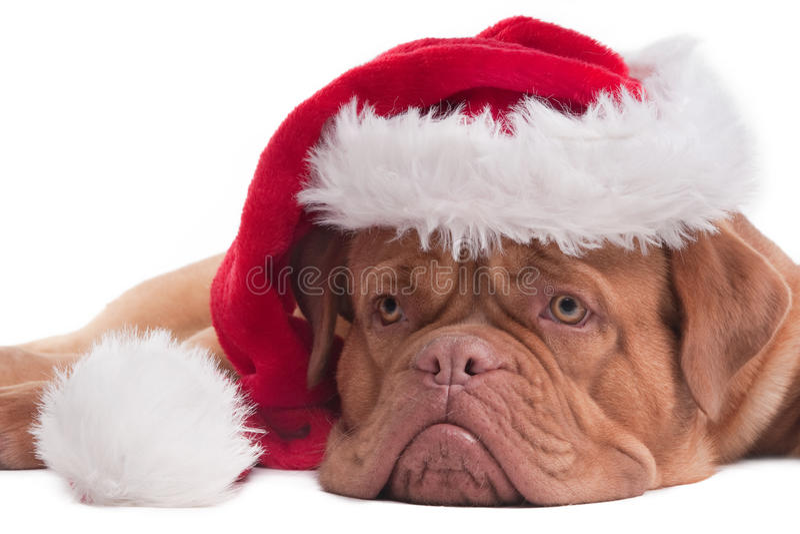 Fin de chiot de Santa vers le haut photos libres de droits