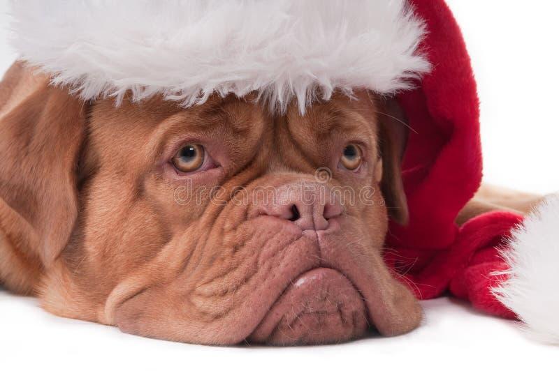 Fin de chiot de Santa vers le haut photographie stock libre de droits