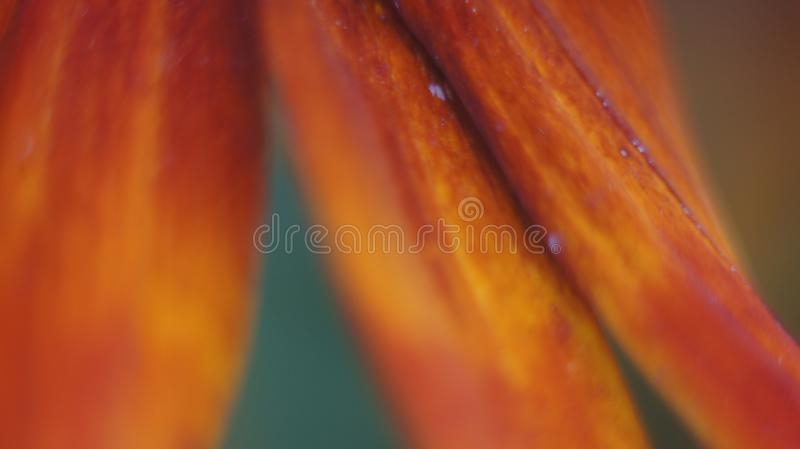 Fin de fleur de cône  photo stock