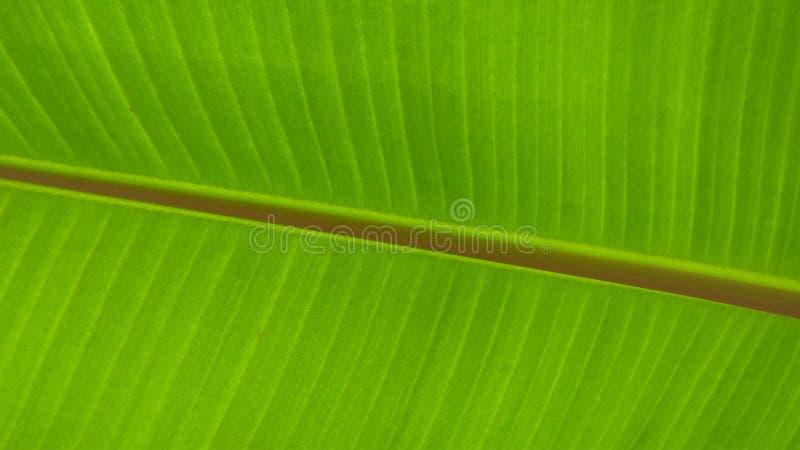Fin de lame de banane vers le haut illustration de vecteur