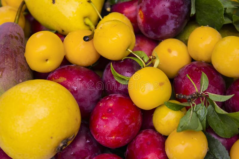 Fin de prunes et de prune de cerise  photo stock