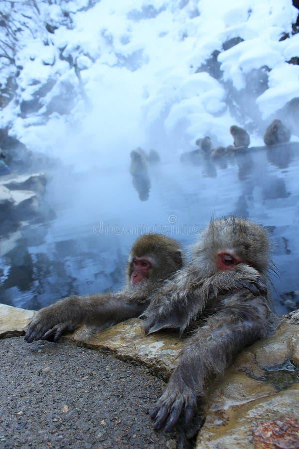 Fin de singe de neige  photos libres de droits