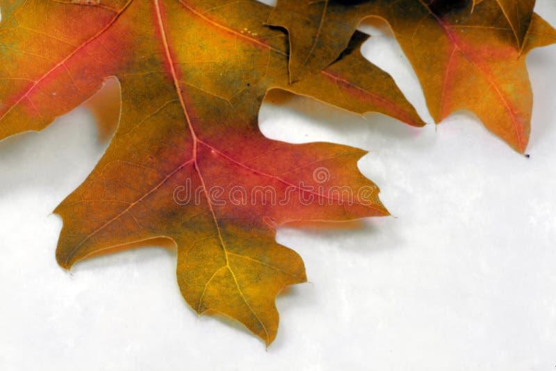 Fin de spectacular d'automne vers le haut photos libres de droits