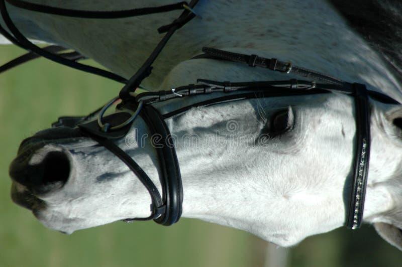 Fin de visage de cheval image stock