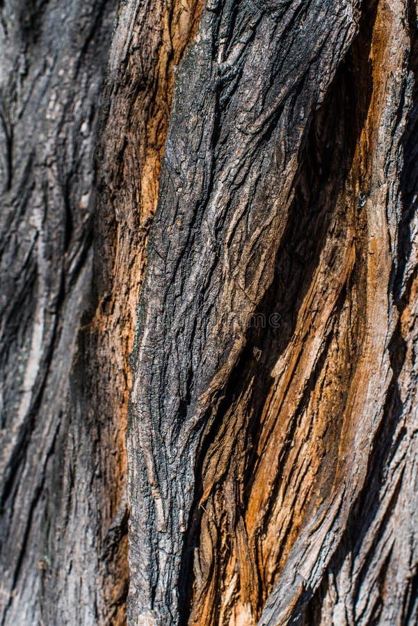 Fin en bois intéressante d'écorce  Configurations normales photo libre de droits
