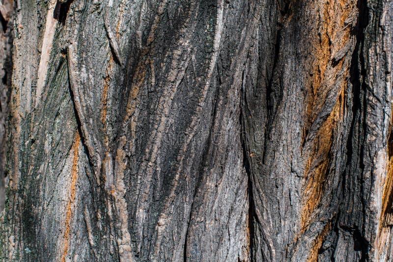 Fin en bois intéressante d'écorce  Configurations normales images libres de droits