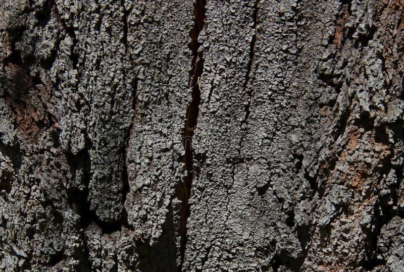 Fin générique et détaillée d'écorce d'arbre criquée images stock