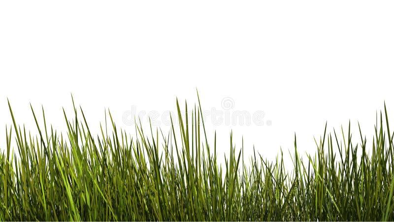 Fin grande d'herbe  illustration de vecteur