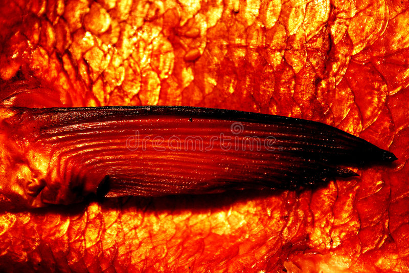 fin leszcza wędzone obrazy stock