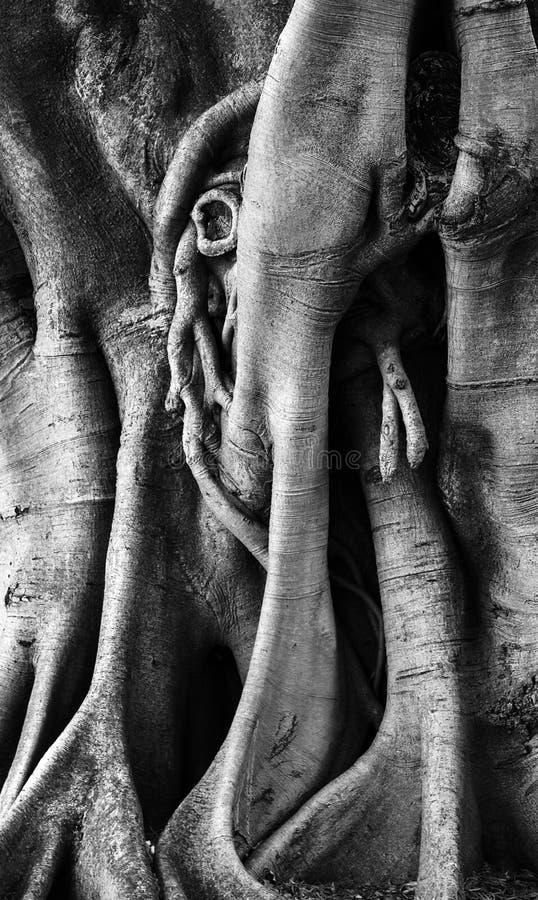 Fin noueuse d'arbre  photos libres de droits