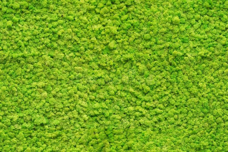 Fin sans couture vers le haut de texture verte de mousse photographie stock