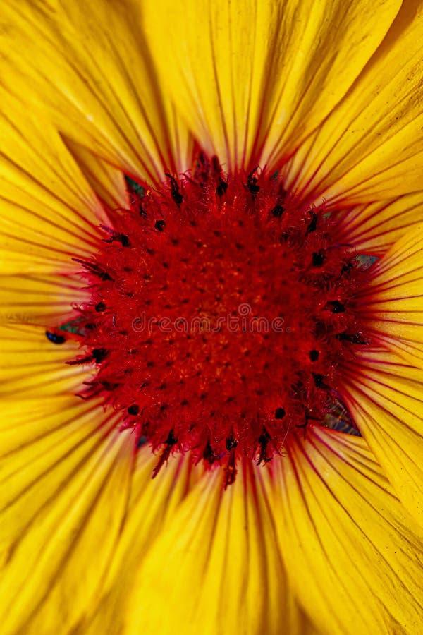 Fin superbe vers le haut de fleur jaune photos stock
