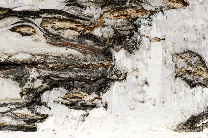 Fin, texture et fond d'écorce de bouleau photo libre de droits