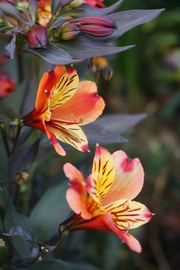 Fin vers le haut d'une fleur photographie stock