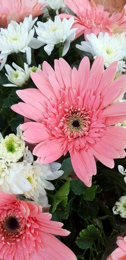 Fin vers le haut de belle fleur de rose et blanche de bouquet pour le fond image libre de droits