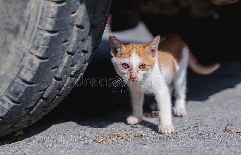 Fin vers le haut de chaton orange maigre égaré sous la voiture avec des cicatrices sur le visage photographie stock libre de droits