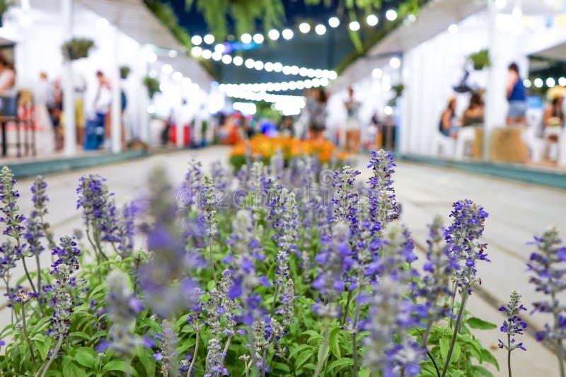 Fin vers le haut de fleur violette pourpre sur le marché en plein air image stock