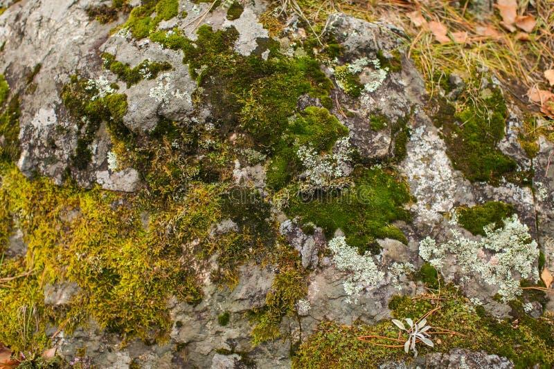 Fin vers le haut de mousse beautyful sur des roches dans de vieilles pierres grises de forêt avec le fond vert de texture de mous photographie stock
