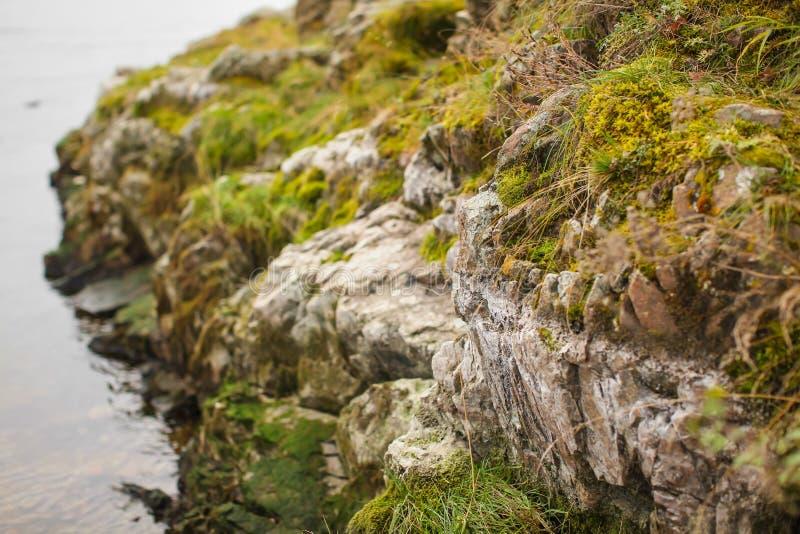 Fin vers le haut de mousse beautyful sur des roches par la rivière Vieilles pierres grises avec le fond vert de texture de mousse photos libres de droits