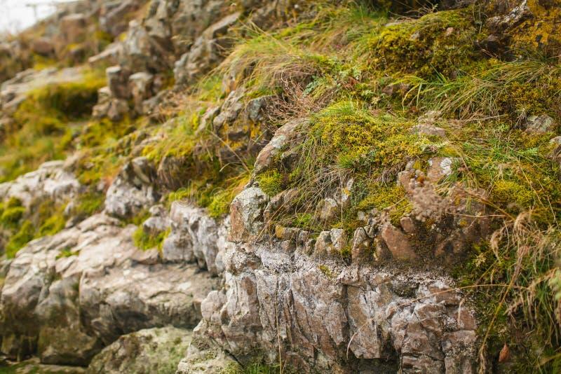 Fin vers le haut de mousse beautyful sur des roches par la rivière Vieilles pierres grises avec le fond vert de texture de mousse photographie stock libre de droits