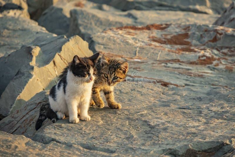 Fin vers le haut des chats mignons d'amis photos libres de droits