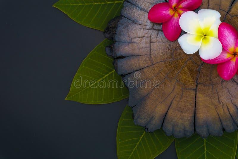 Fin vers le haut des fleurs de plumeria de nature employant comme wallpeper photographie stock libre de droits