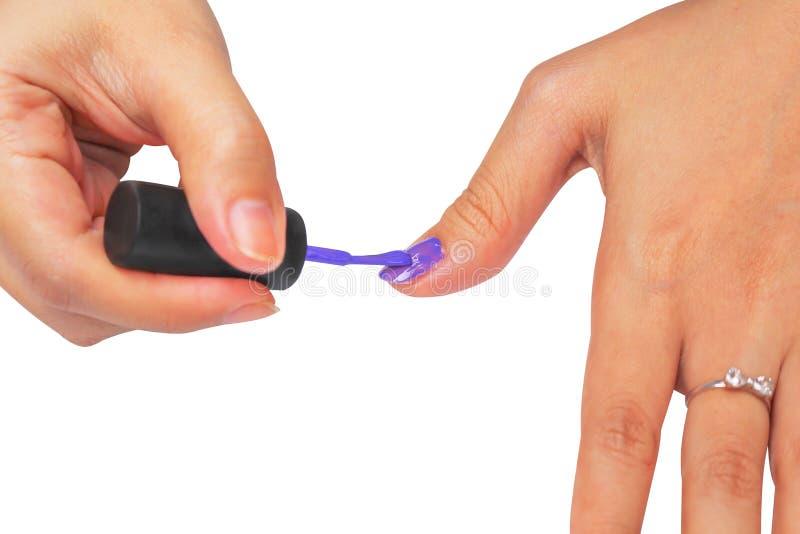 Fin vers le haut du vernis à ongles pourpre étant appliqué sur la femme asiatique de mains gauches d'isolement sur le fond blanc  image stock