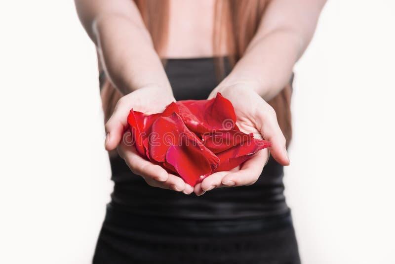 Fin vers le haut pétales de rose dans les mains d'une jeune femme photo libre de droits