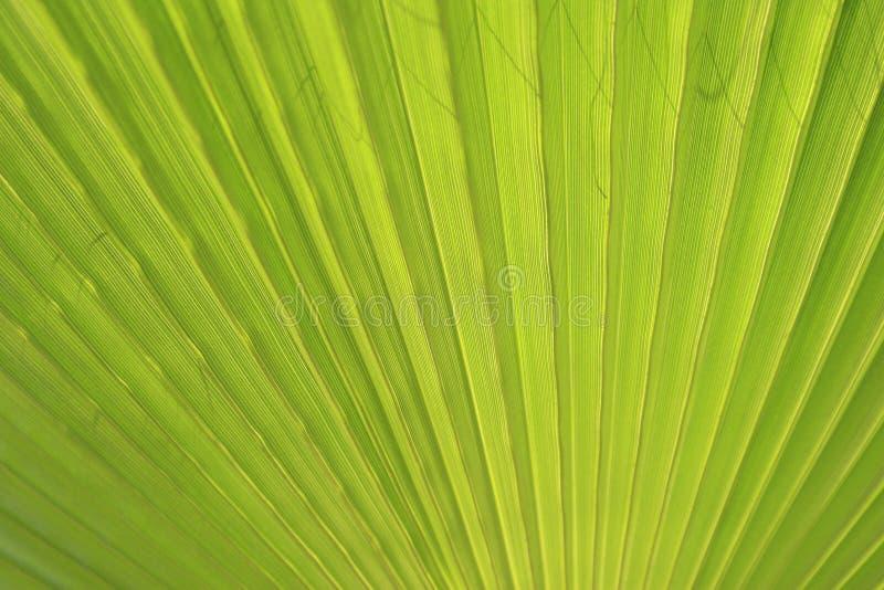 Fin verte de palmette vers le haut photographie stock