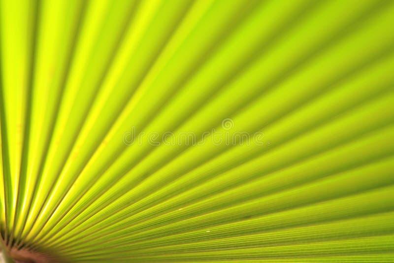Fin verte de palmette vers le haut photos stock