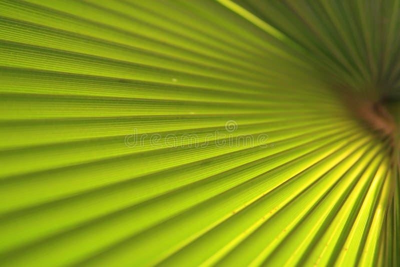 Fin verte de palmette vers le haut images libres de droits