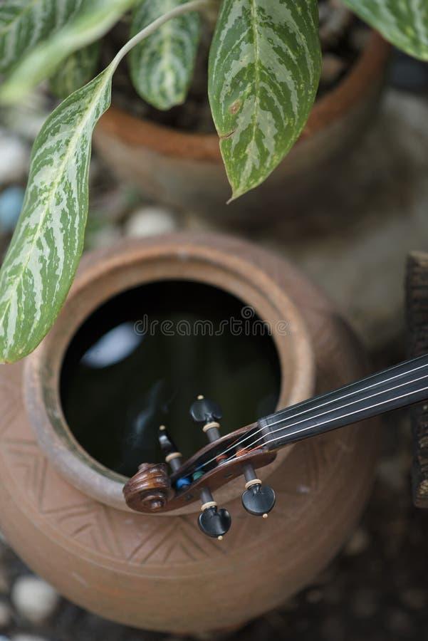 Fin verticale vers le haut d'instrument classique de violon avec le fond naturel photos stock