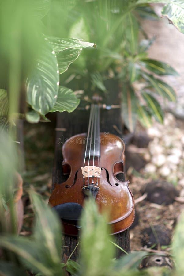 Fin verticale vers le haut d'instrument classique de violon avec le fond naturel image libre de droits