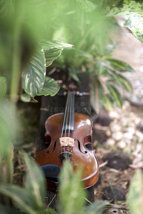 Fin verticale vers le haut d'instrument classique de violon avec le fond naturel photo libre de droits