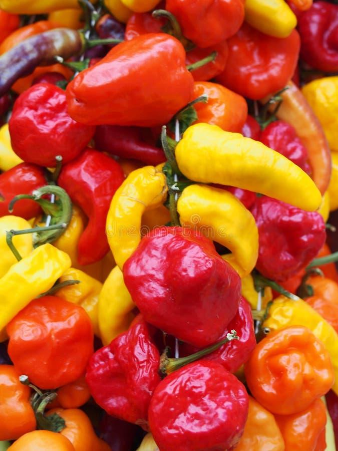Fin vibrante de plein cadre des poivrons mélangés colorés lumineux de variété aux nuances de rouge, d'orange et de jaune images stock