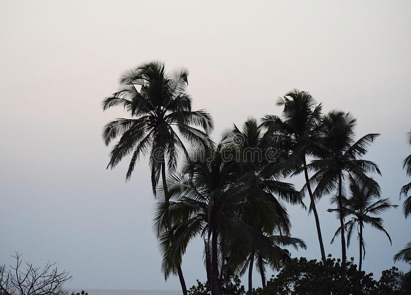 Final del día - palmeras en cielo de la tarde - fondo natural imagenes de archivo