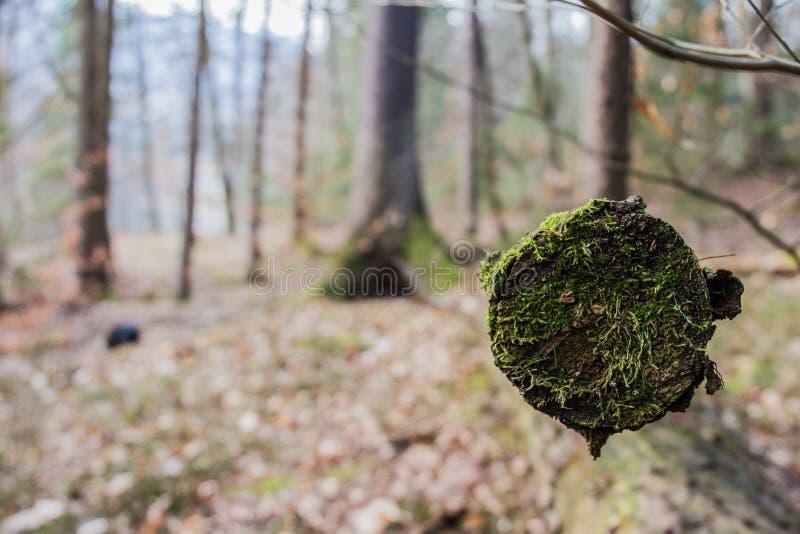 Final del invierno en bosque fotografía de archivo