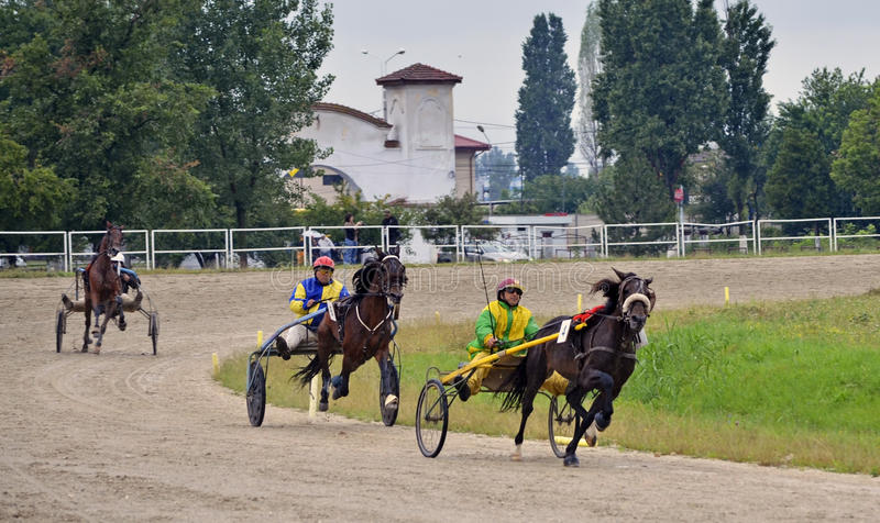 Download Final race editorial stock image. Image of animal, gheorghe - 20150224