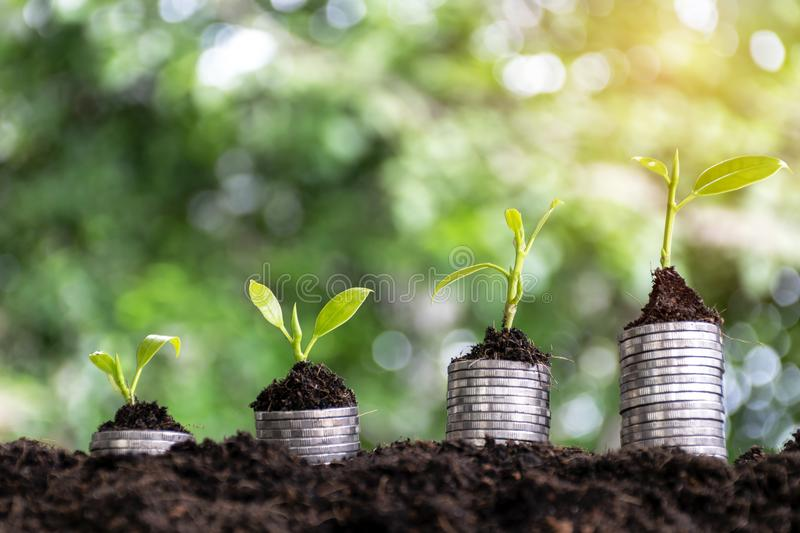 Financial growth, stacking coins, stacking four stacks,. And planting trees on it, ascending order, bokeh backdrops stock photography