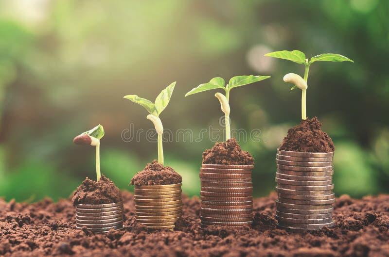 Finanza crescente di affari di concetto dei soldi della pianta fotografia stock libera da diritti