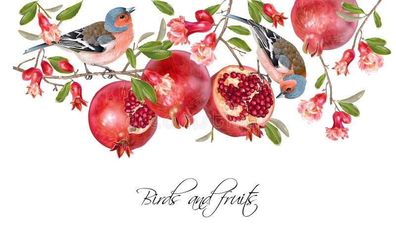 Finch pomegranate border vector illustration