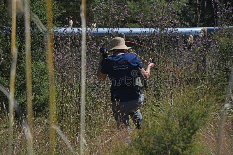 finden Sie die Kiwi im Busch stockfotografie