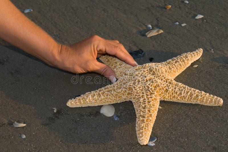 Finden von einem Seastar lizenzfreie stockbilder