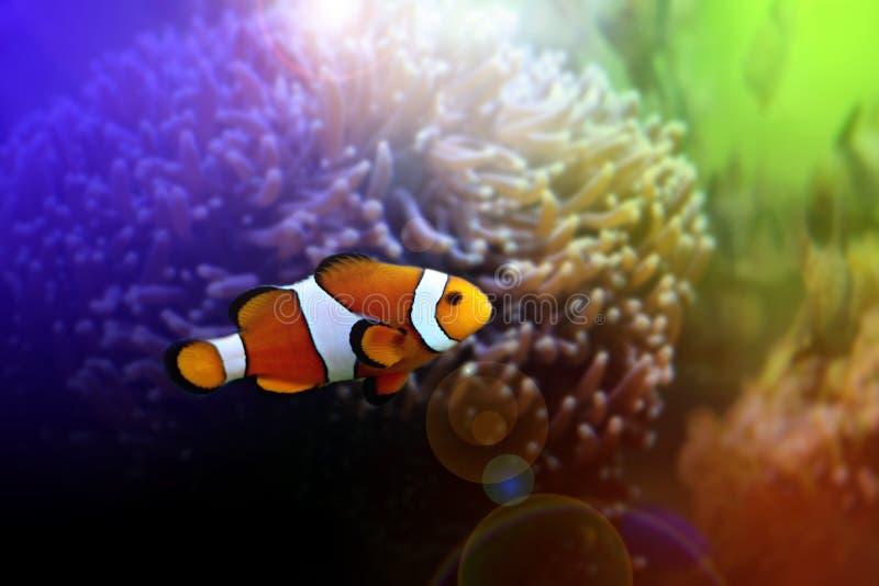 Finding Nemo royalty free stock photo