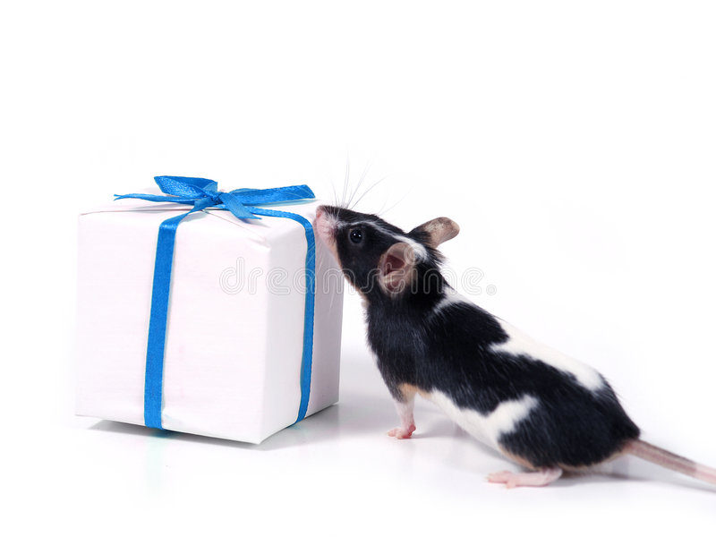 Download Finding a present stock photo. Image of mice, gift, anniversary - 478118