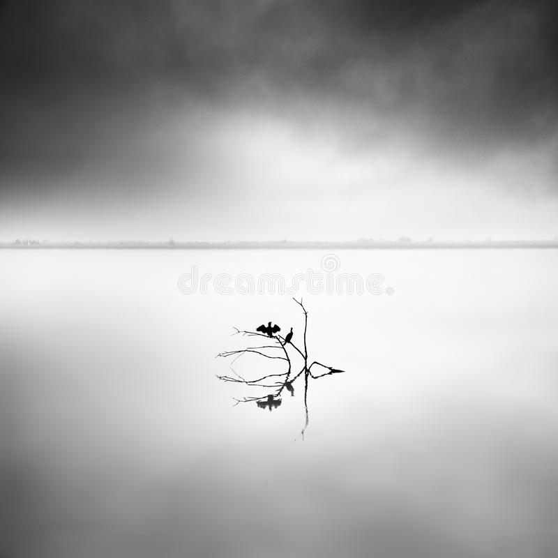 Minimal waterscape with plants and birds in the water royalty free stock photos